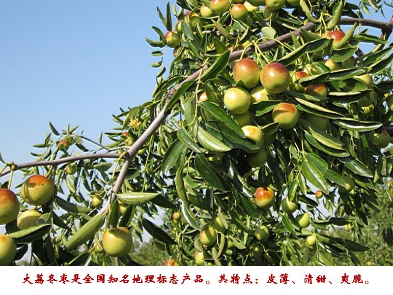 陕西大荔冬枣 500g_大荔冬枣